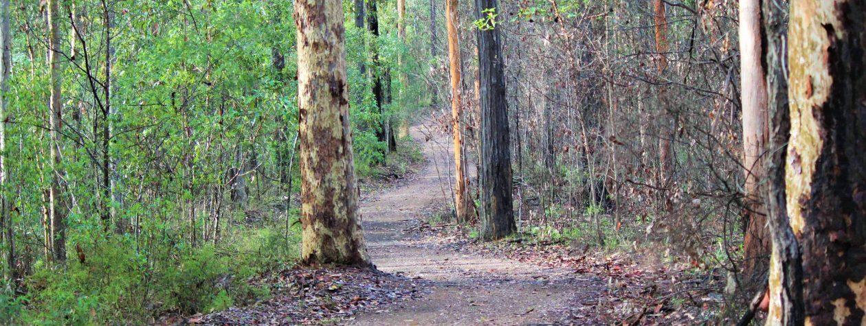 Bunyaville Trail Runners & Bunya Belles